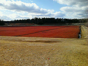 Cranberry Bog | Plymouth MA Real Estate